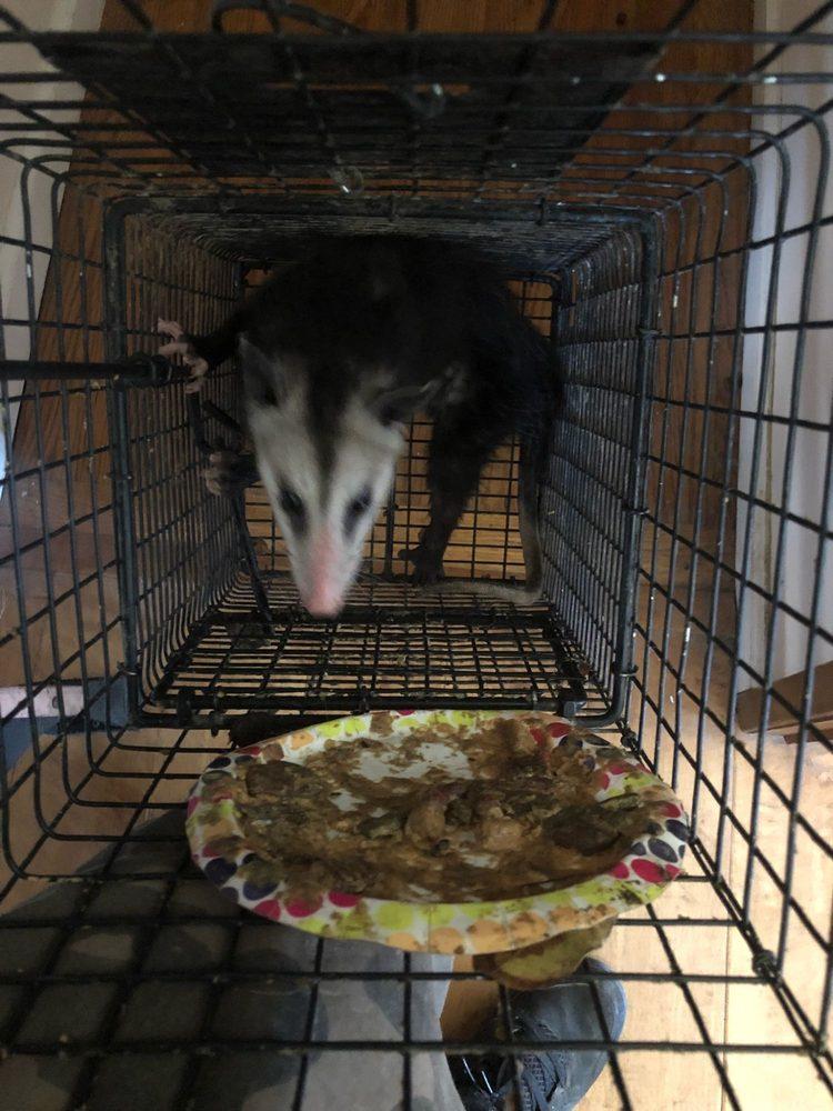Active Animal Trapping - 291 Photos & 113 Reviews - Wildlife