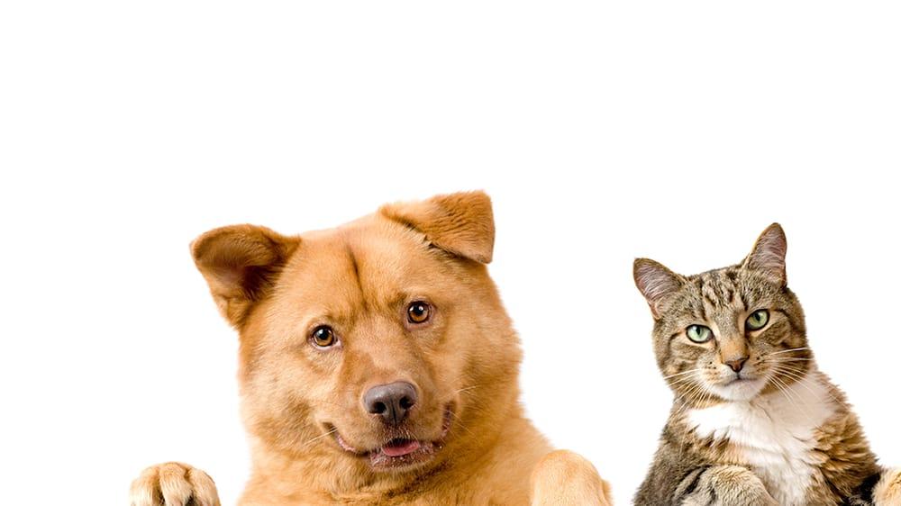 Savannah Veterinary Clinic: 1302 W Hwy 71, Savannah, MO