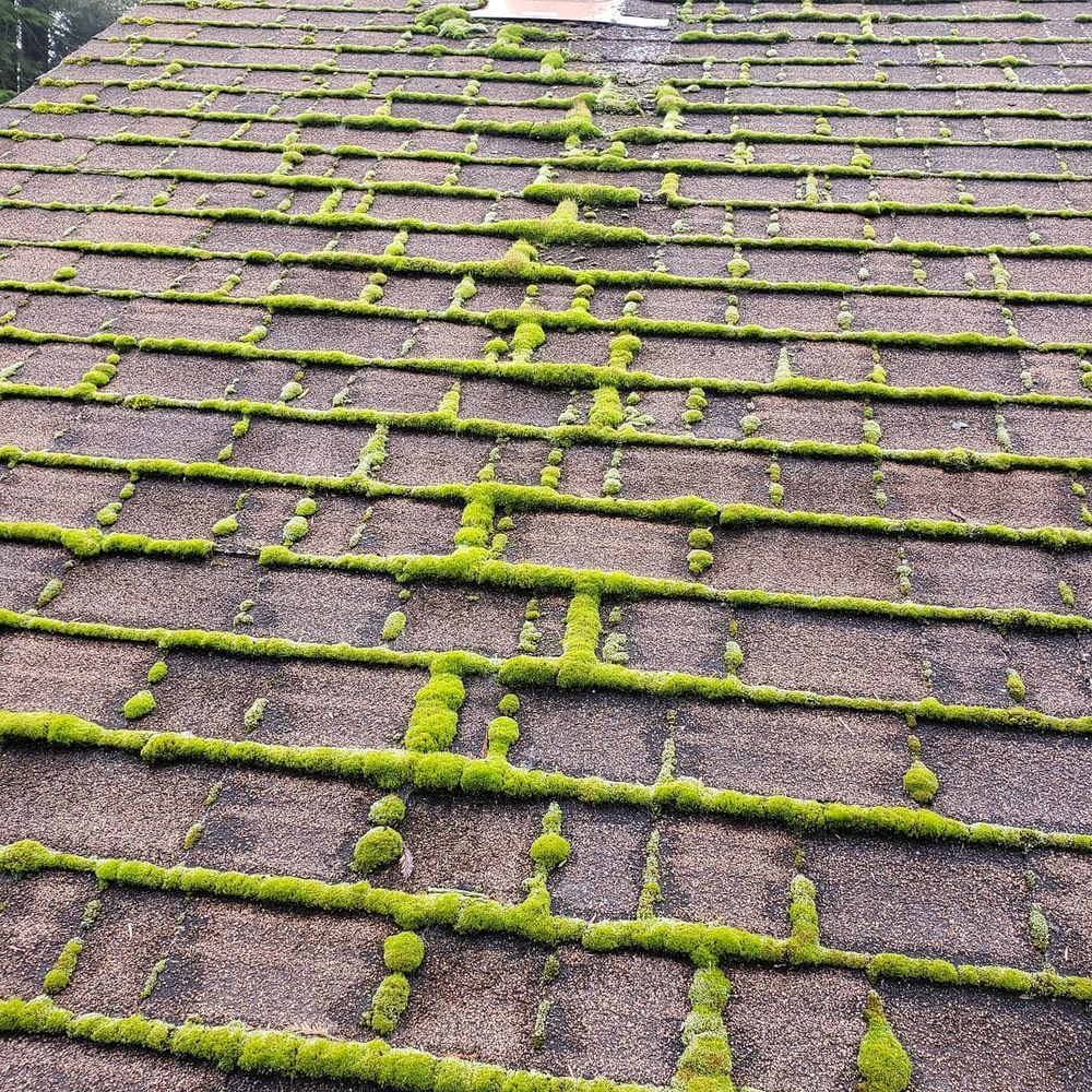 Diamond Touch Roof Cleaning: McKinleyville, CA