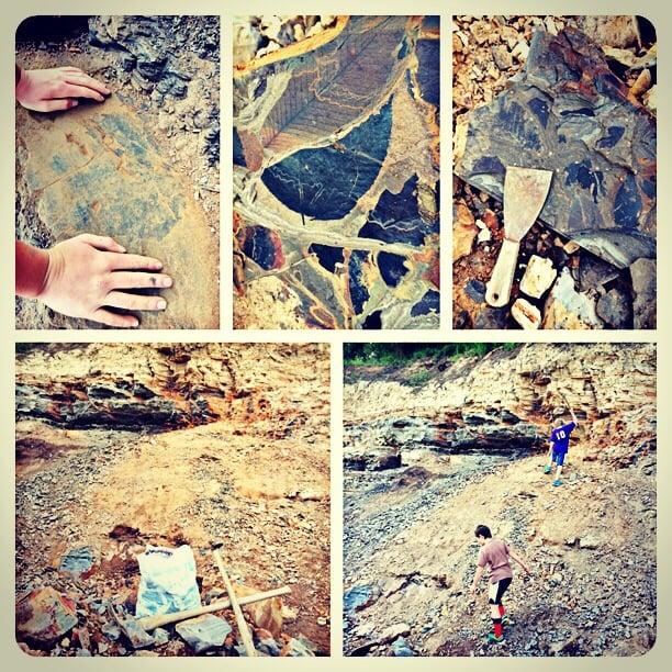 Fossil Bowl: 52450 Hwy 3, Clarkia, ID
