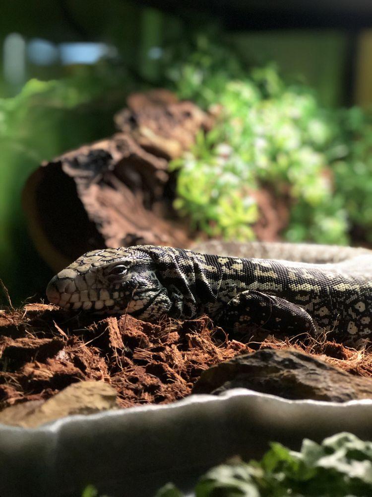 Regal Reptiles: 546 W Shields, Fresno, CA