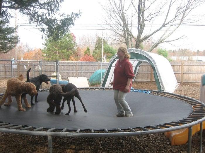 Pet Recess: 36 Main St, Lakeville, MA