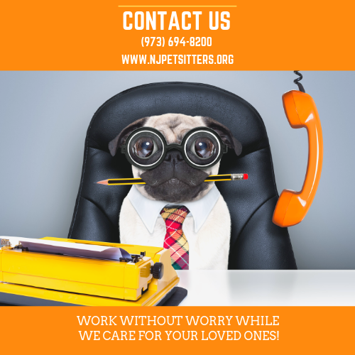North Jersey Pet Sitters