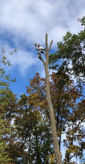 Custom Tree Service: 2750 Hwy 22, Riverside, IA