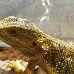 Predator's Reptile Center - 46 Photos & 75 Reviews - Pet Stores