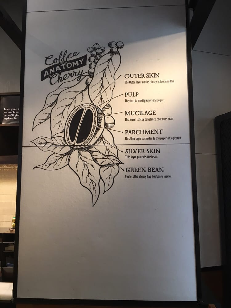 Coffee cherry anatomy - Yelp