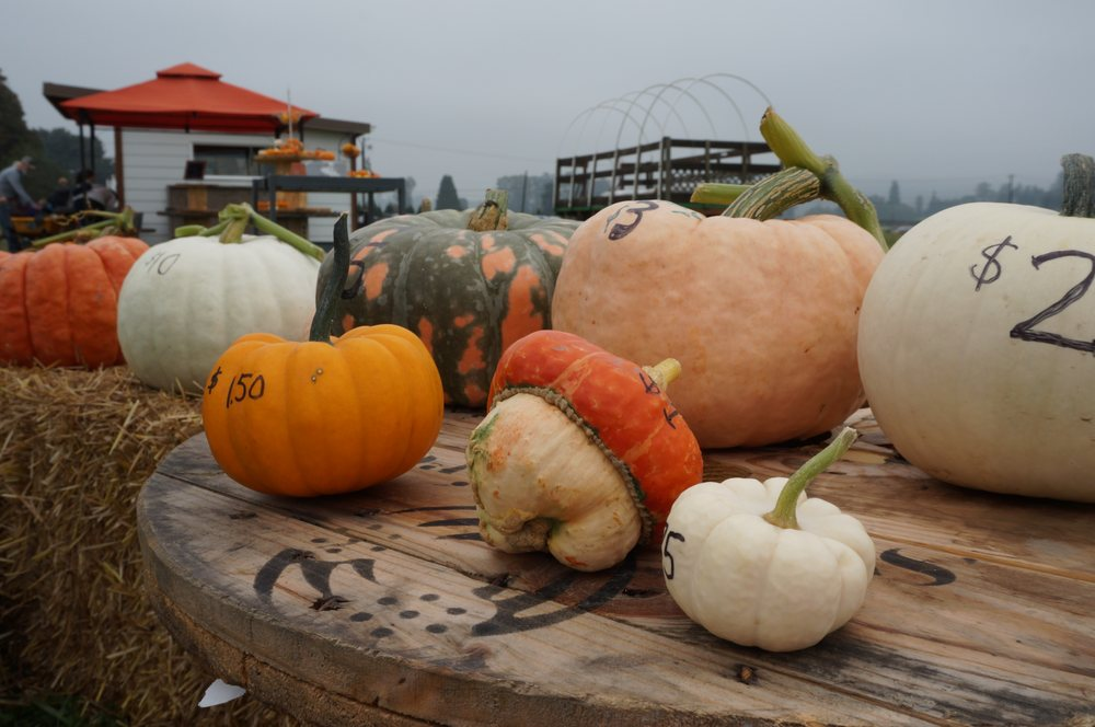 Bailey Vegetables: 12711 Springhetti Rd, Snohomish, WA
