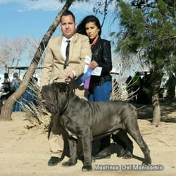 Mastinos Del Manicomio - Pet Breeders - Victorville, CA - Phone