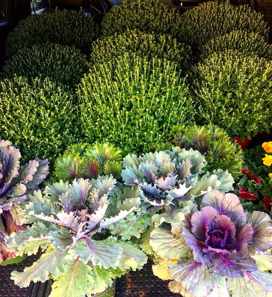 Brown's Greenhouses: 335 Crescent Ridge Rd NE, Tuscaloosa, AL