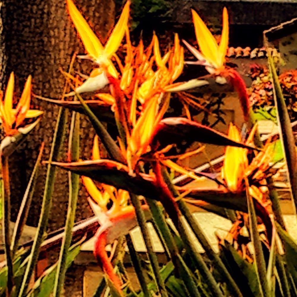 La pradera del condado de Summit proporciona flores en flor, un montón de pájaros - incluyendo una rareza; Vista Aérea | cleveland.com
