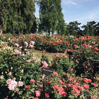 Huntington Library Art Collections Botanical Gardens 8451 Photos 1600 Reviews