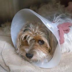 Obt-Orange Ave Pet DOC Hospital - 13 Reviews - Veterinarians