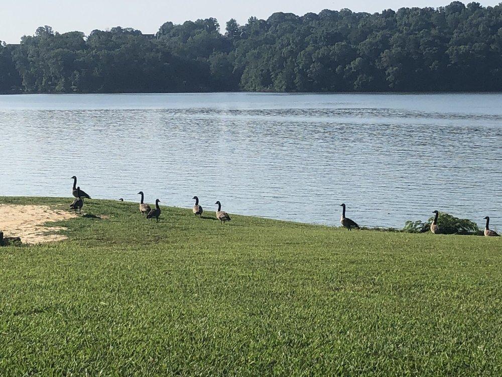 Lenoir City Park: 5200 City Park Dr, Lenoir City, TN