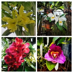 Photo Of Soroa Orchid Gardens   Homestead, FL, United States