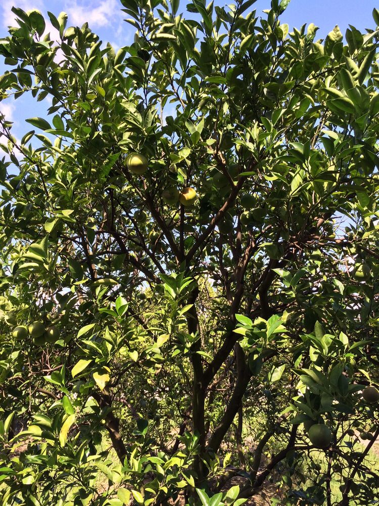 Florida's Natural Growers Grove House: 20160 Hwy 27, Lake Wales, FL