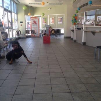 City Of San Antonio Animal Care Services 12 Photos