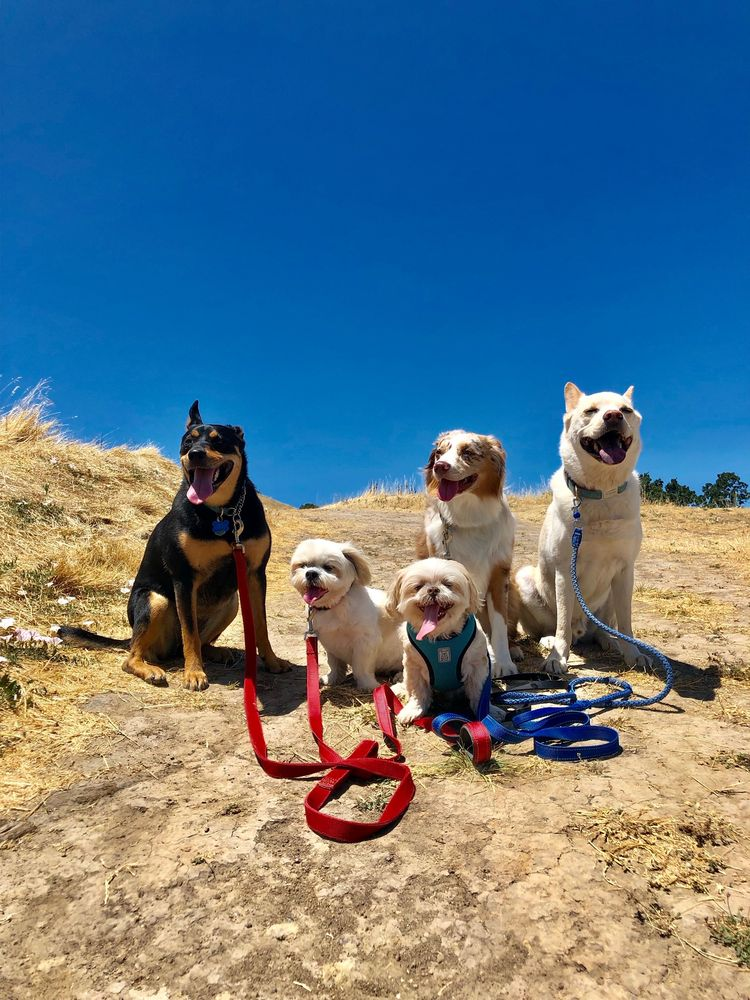 Happy Go Lucky Pet Care