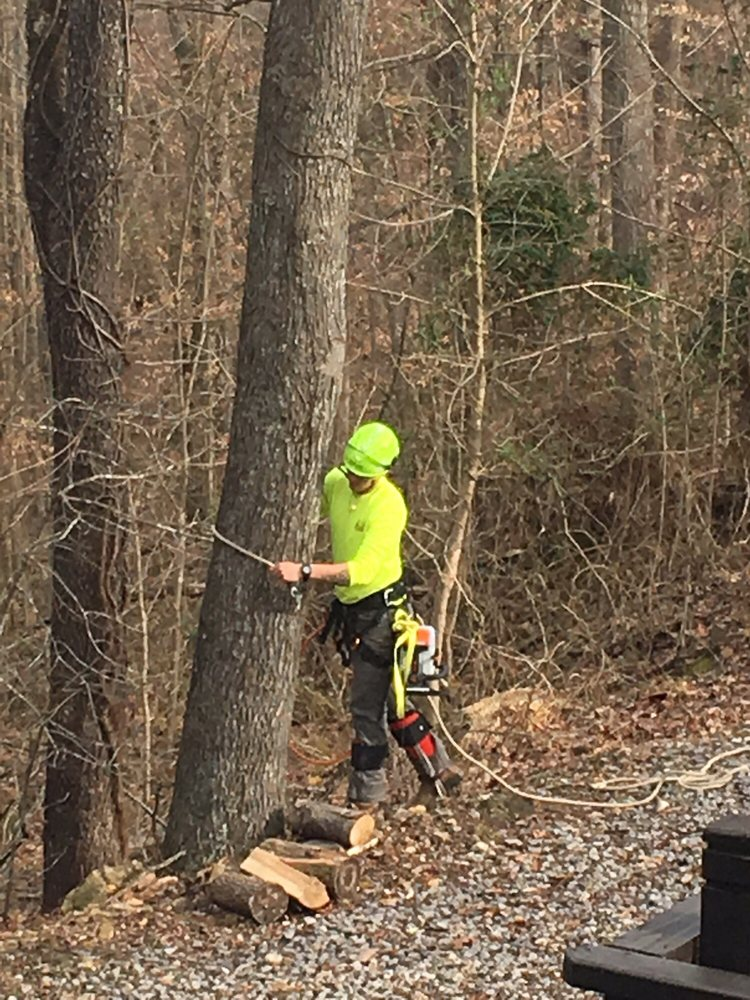Monster Tree Service of Middle Tennessee: Franklin, TN