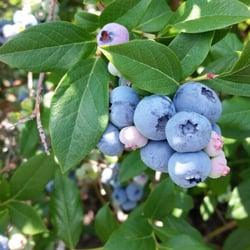 blue sky berry farm fruits veggies 15552 s 1050th w wanatah