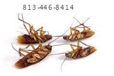 APC Pest Control: Apollo Beach, FL