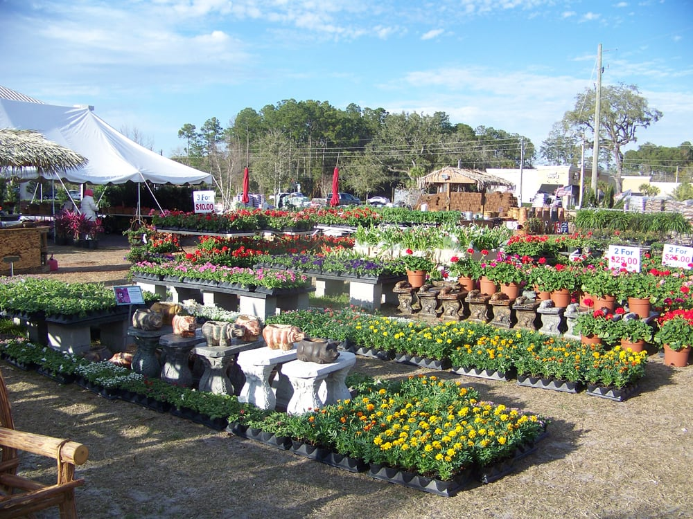 Discount Plants Of Florida Nurseries Amp Gardening 14985