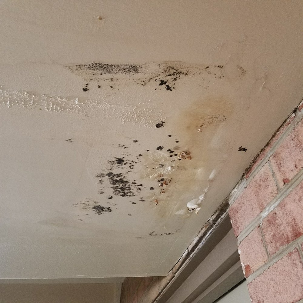 "Mold In Apartment: Multiple ""repairs"" Done By Management, Still Can't Fix A"