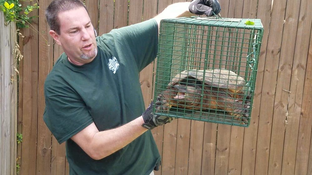 AAAC Wildlife Removal of Mobile: Mobile, AL