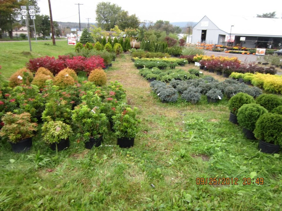 Paul Kelloggu0027s Garden Center U0026 Landscaping   Nurseries U0026 Gardening   Corner  Of Rt590 U0026 Sawmill Rd, Hamlin, PA   Phone Number   Yelp
