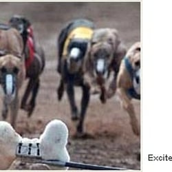 Off track dog betting phoenix risked money on a bet