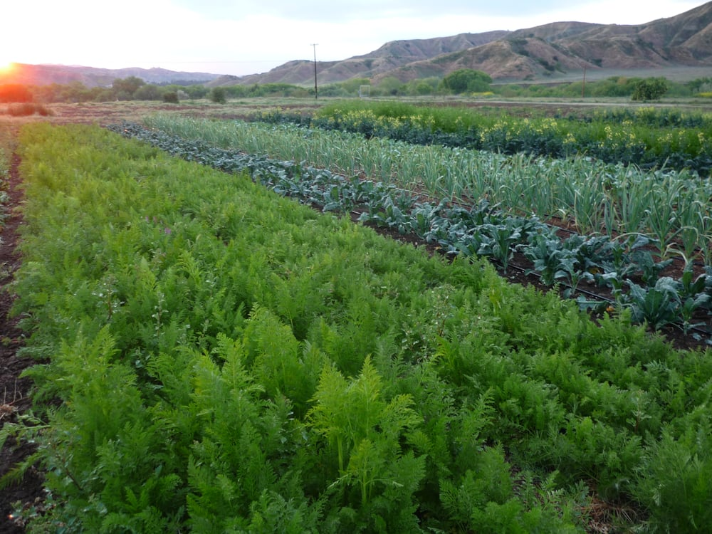 Three Sisters Farm: 30370 San Timoteo Canyon Rd, Redlands, CA