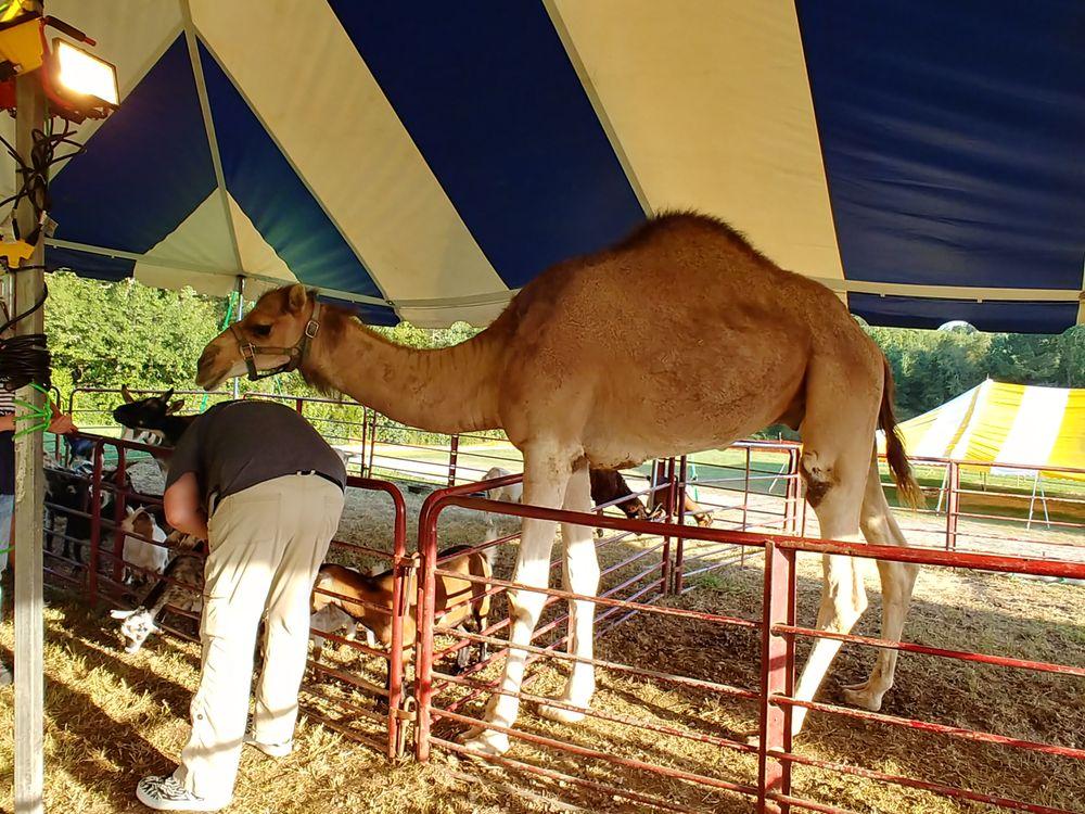 Shelby County Fair: 86 Argo Rd, Columbiana, AL