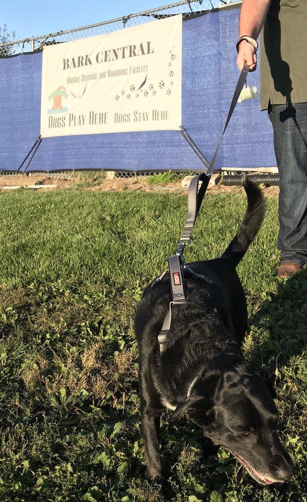 Bark Central Doggie Daycare and Boarding Resort: 2170 Wayne Rd, Chambersburg, PA