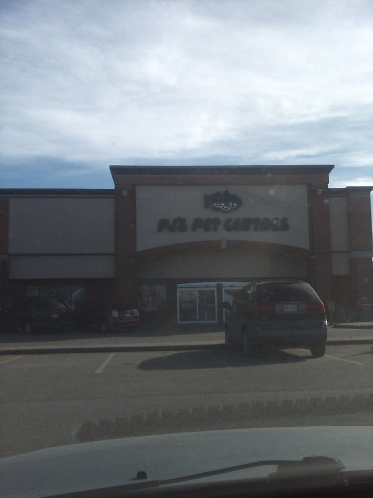 pj s pets   pet shops   3803 calgary trail edmonton ab