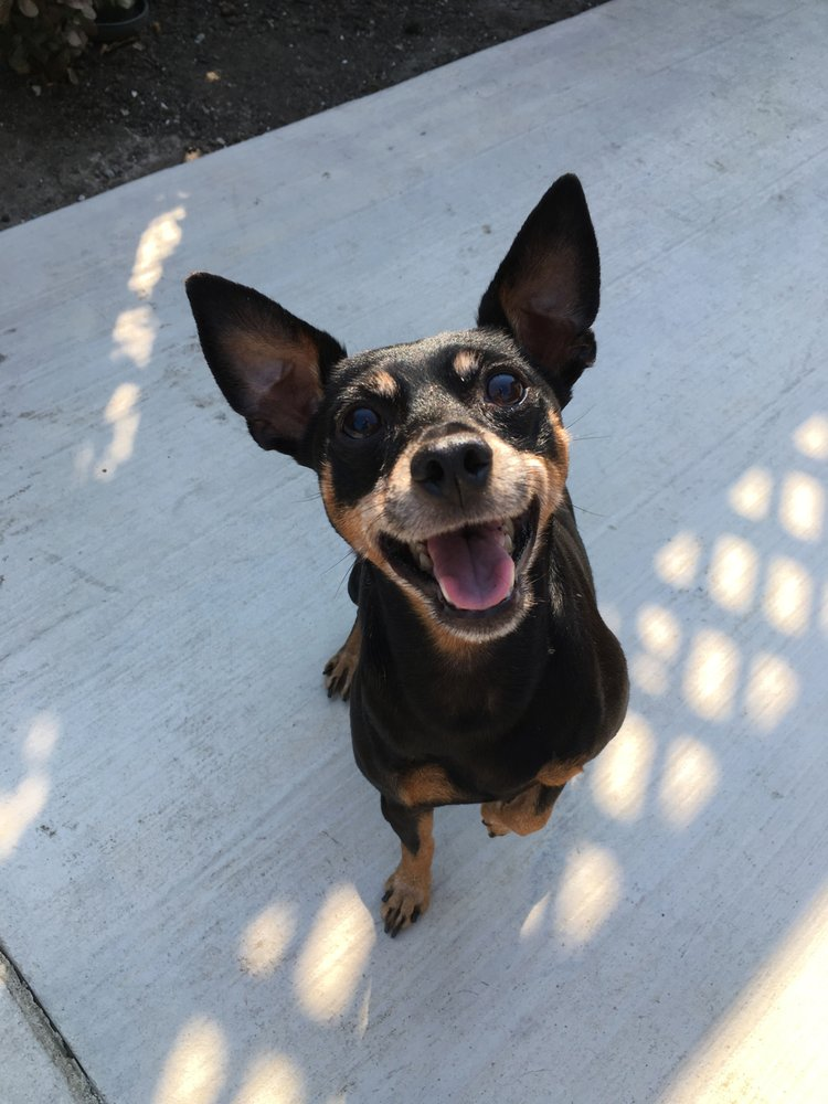 Ray's Pet Care: Palo Alto, CA