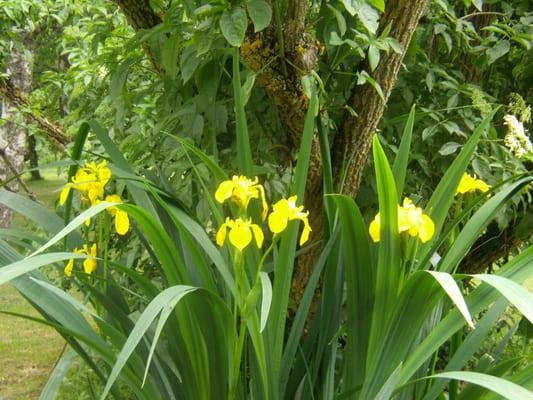 Jardinier toulouse 37 corneille ar nes tolosa haute for Cherche jardinier toulouse