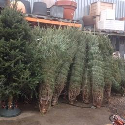Photo Of Natty Garden   Brooklyn, NY, United States. Fresh Cut Christmas  Trees