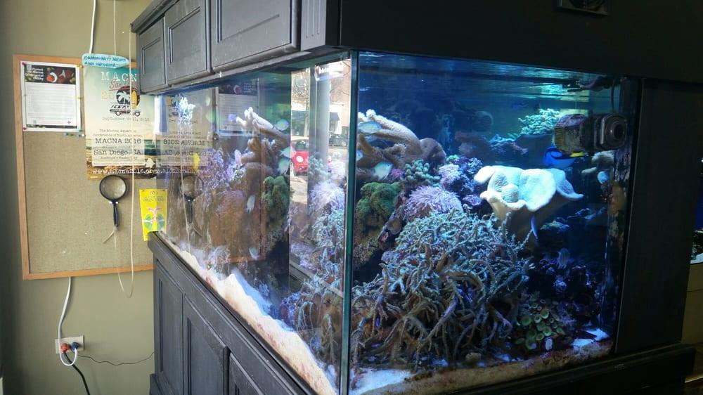 Life Aquatic: 94 Park St, New Canaan, CT