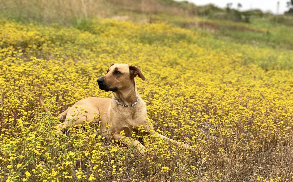 Lorenzo's Dog Training Team: Crestview, FL