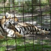 Big Cat Rescue - 277 Photos & 226 Reviews - Zoos - 12802