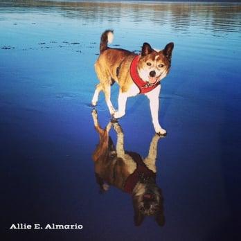 Dog Park Mckinleyville Ca