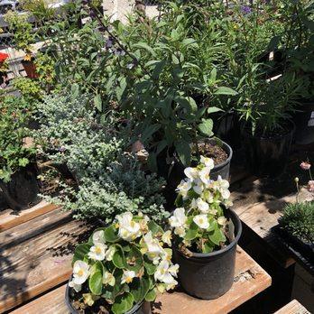 Photo Of Lakewood Nursery Cypress Ca United States