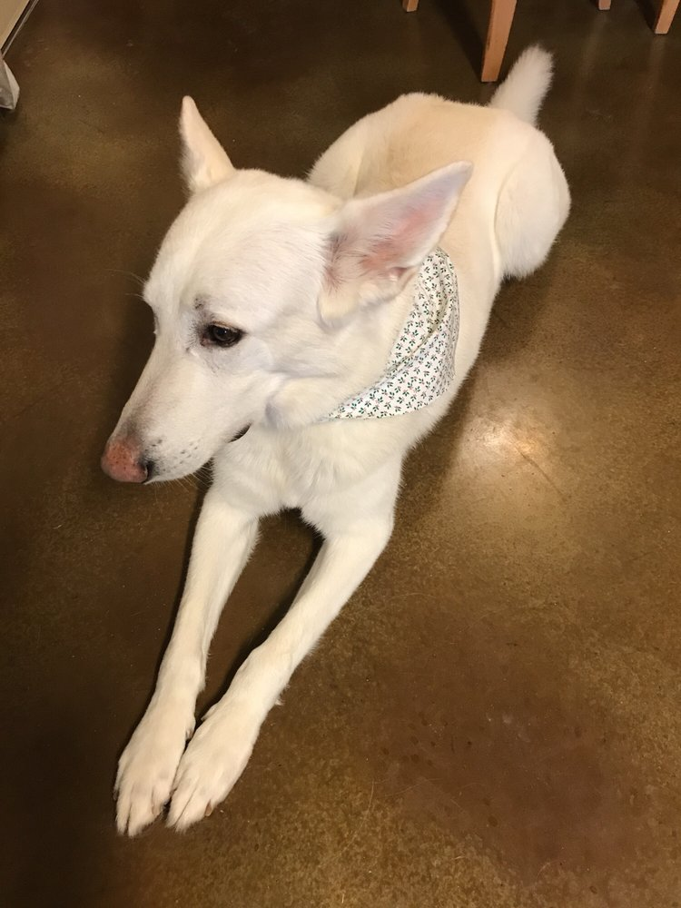 Pampered Pets Grooming: 101 W Ave J, Jarrell, TX
