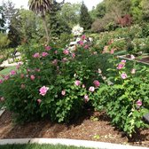 Mckinley Park Rose Garden 228 Photos 35 Reviews Parks Corner 33rd And H St East