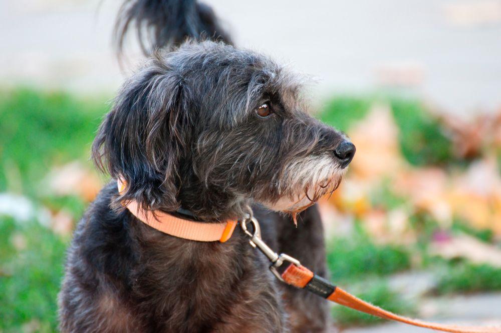 Dasher Pet Care: Los Angeles, CA