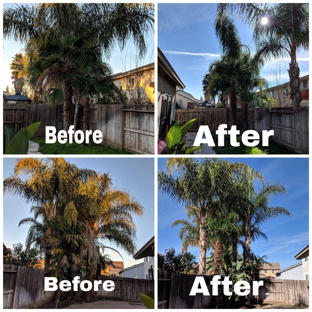 R's Tree Care: Manteca, CA