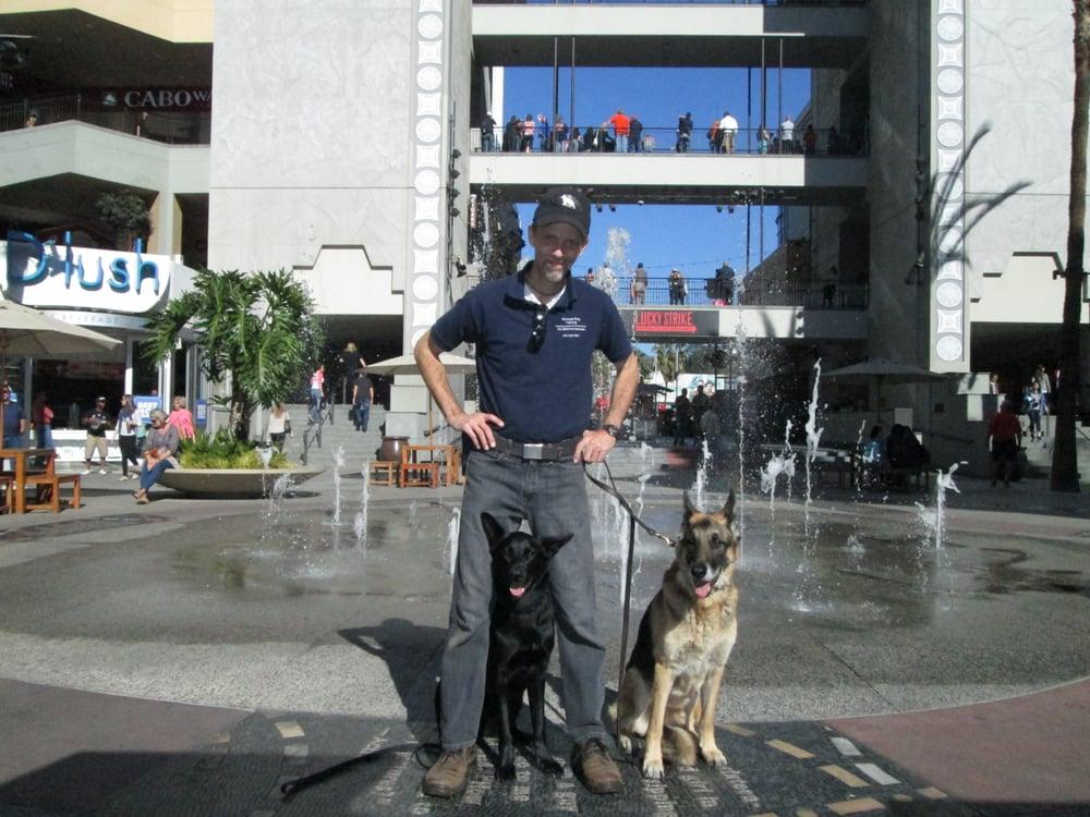Rip's Dog Training: Conway, SC