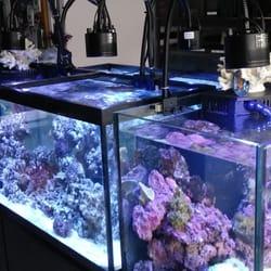 Archer Fish Tank | Archer Fish Aquariums 25 Photos 16 Reviews Aquariums 514