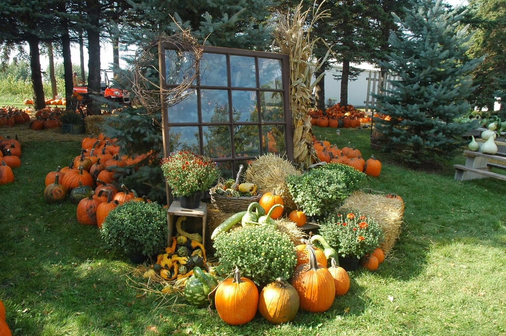 Barten Pumpkins: 5716 W 280th St, New Prague, MN