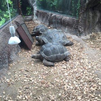 krokodillezoo