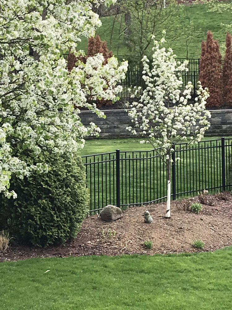 Nassar Tree Care: 28 Montour 4 Pl, Lawrence, PA